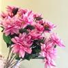 Liana Flower